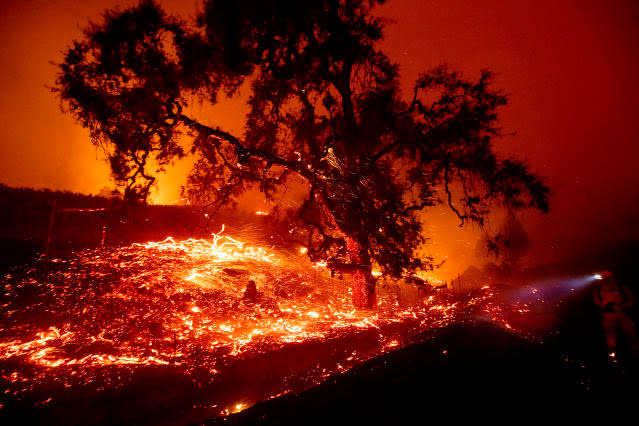 Embers fly from a tree as the Kincade Fire burns near Geyserville, Calif., on Thursday, Oct. 24, 2019. Portions of Northern California remain in the dark after Pacific Gas & Electric cut power to prevent wildfires from sparking during dry and windy conditions. (Photo: Noah Berger/AP)