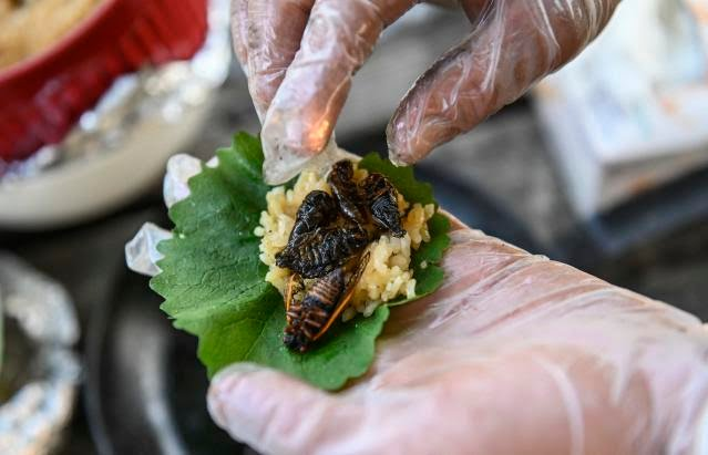 Fried cicadas are rolled into a sushi roll by Chef Bun Lai at Fort Totten Park in Washington, DC