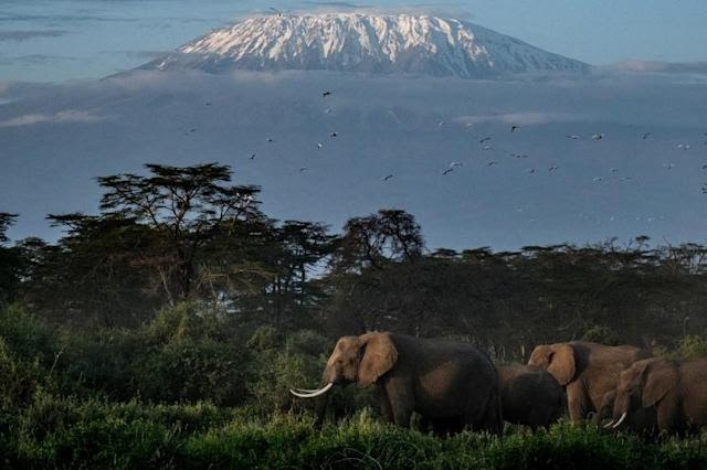 South Africa convinced the UN body's World Heritage Committee to back an amendment -- also supported by other African states -- to keep the W-Arly-Pendjari (WAP) complex off the list.
